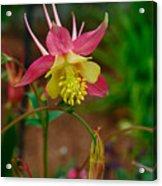 Dainty Flower Acrylic Print