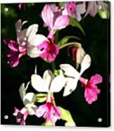 Dainty Orchids Acrylic Print