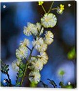 Dainty Wildflowers On Blue Bokeh By Kaye Menner Acrylic Print