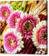 Daises On Indian Corn Acrylic Print