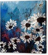Daisies 59060 Acrylic Print