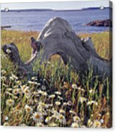 136236-daisies And Driftwood  Acrylic Print