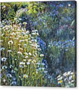 Daisies And Shades Of Blue Acrylic Print by Steve Spencer