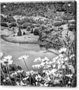 Daisies At Queens View In Greyscale Acrylic Print