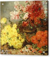 Daisies, Begonia, And Other Flowers In Pots Acrylic Print