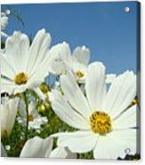 Daisies Flowers Art Prints White Daisy Flower Gardens Acrylic Print