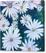 Daisies Galore Acrylic Print