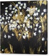 Daisies In Gold Abstraction Acrylic Print