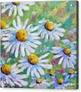 Daisies In Spring Acrylic Print