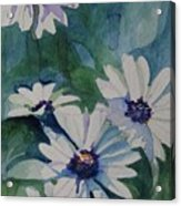 Daisies In The Blue Acrylic Print