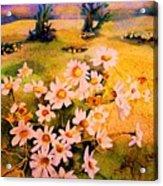 Daisies In The Sun Acrylic Print