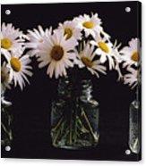 Daisies On Black Acrylic Print