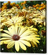 Daisies Yellow Daisy Flowers Garden Art Prints Baslee Troutman Acrylic Print
