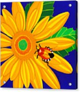 Daisy And Shieldbug Acrylic Print