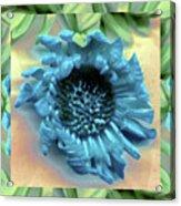 Daisy Blue Frame Acrylic Print