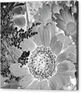 Daisy Bouquet In Black And White Acrylic Print
