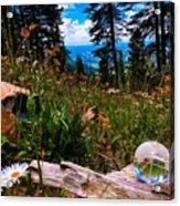 Daisy Companions Acrylic Print