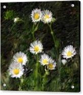 Daisy Day Fantasy Acrylic Print