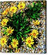 Daisy Decor Acrylic Print