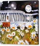 Daisy Desoto Acrylic Print by Suzy Pal Powell