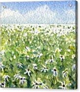 Daisy Field Acrylic Print