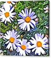 Daisy Flower Garden Abstract Acrylic Print
