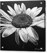 Daisy I Acrylic Print by Marna Edwards Flavell