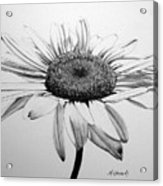 Daisy II Acrylic Print