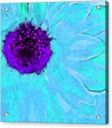 Daisy In Disguise Acrylic Print