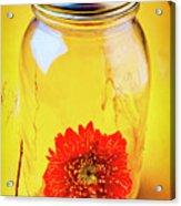 Daisy In Glass Jar Acrylic Print