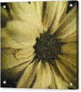Daisy Luscious Acrylic Print