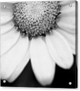 Daisy Smile - Black And White Acrylic Print