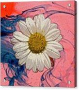 Daisy Swirls 1 Acrylic Print