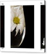 Daisy Triptych Acrylic Print