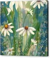Daisy's Blues.  Acrylic Print