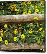 Daisy's Fence Acrylic Print
