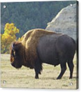 Dakota Badlands Majesty Acrylic Print