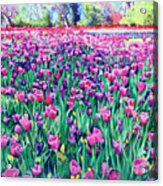 Dallas Tulips Acrylic Print