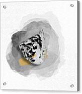 Dalmatian Molly No 01 Acrylic Print