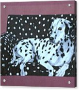 Dalmatian On A Spotted Couch Acrylic Print