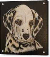 Dalmation Acrylic Print