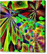 Damselwing Acrylic Print