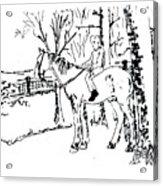 Dan And Horse 11 Acrylic Print