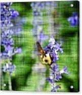 Dance Of The Bubblebee Acrylic Print