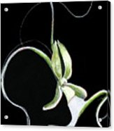 Dance Of The Ghost Orchid Acrylic Print