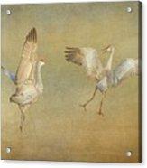 Dance Ritual II, Sandhill Cranes Acrylic Print