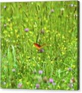 Dancing Among The Flowers Acrylic Print