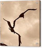 Dancing Birds Acrylic Print