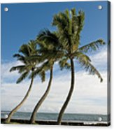 Dancing Coconut Tree Acrylic Print