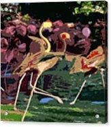 Dancing Flamingos  Acrylic Print